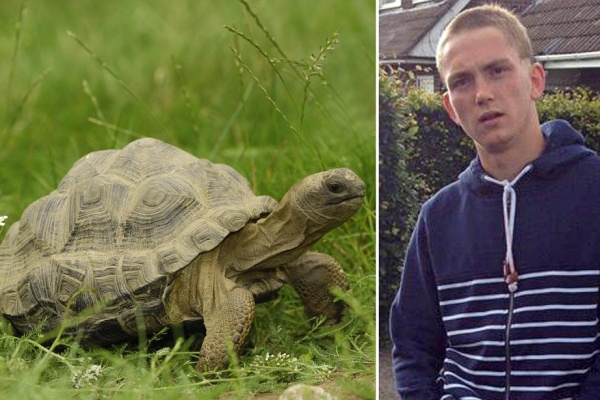 3 Marketing Lessons From A Stolen Tortoise